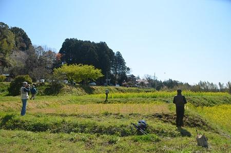 20140407菜の花と小湊電鉄11