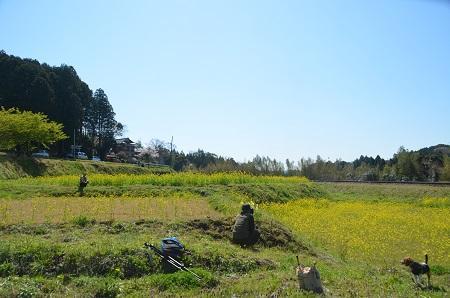 20140407菜の花と小湊電鉄10