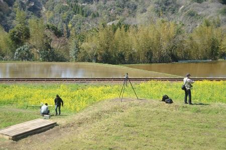 20140407菜の花と小湊電鉄19