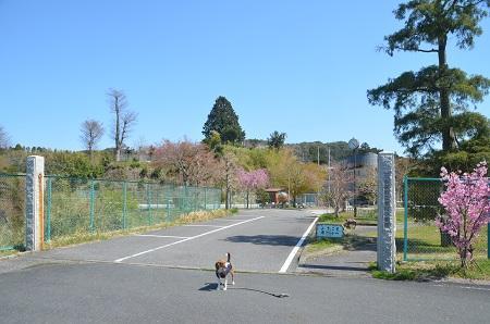 20140407老川小学校08