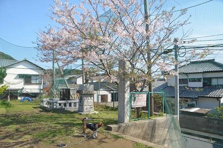 20140407岩和田小学校11