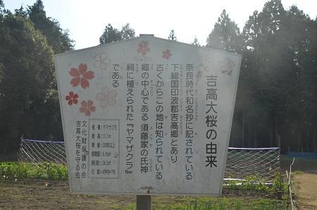 20140411吉高の大桜18
