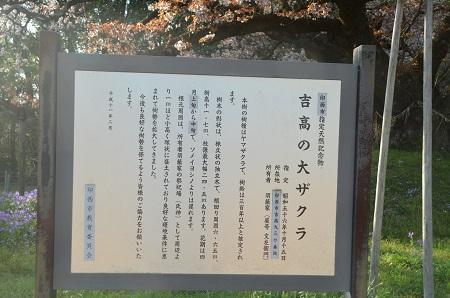 20140411吉高の大桜15