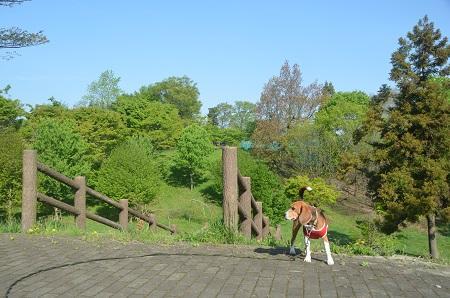 20140427直弥公園08