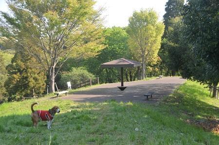 20140427直弥公園07