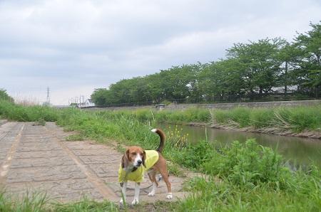 20140505高崎川南公園18