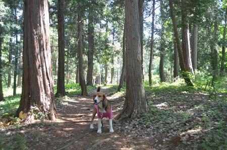 20140510村上緑地公園16