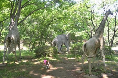 20140510村上緑地公園15
