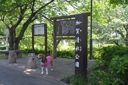 20140510加賀清水公園11