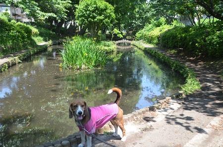 20140510加賀清水公園09
