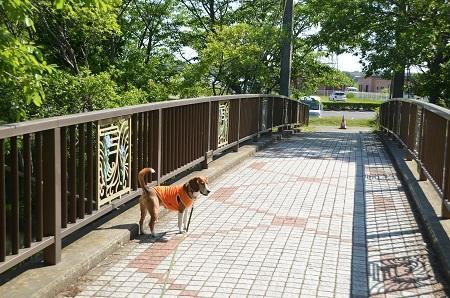 20140518ふるさとふれあい公園06