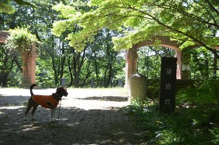 20140518蛇沼公園17