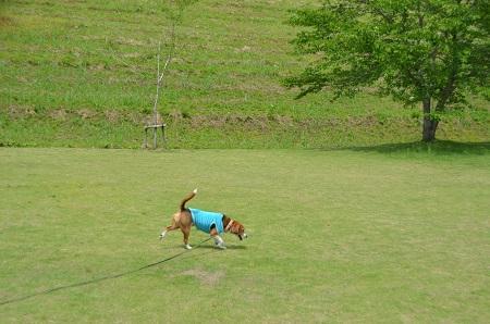 20140519小中池公園05