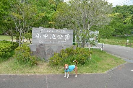 20140519小中池公園03