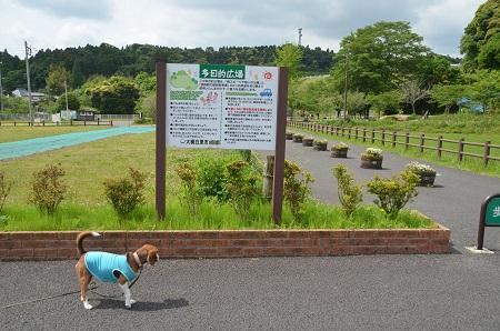 20140519小中池公園01