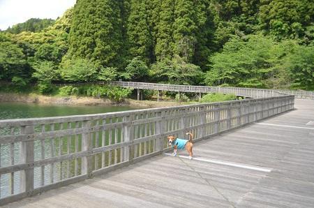 20140519小中池公園20