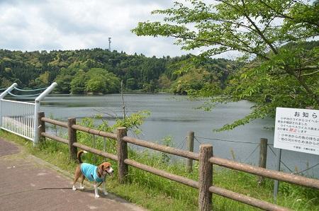 20140519小中池公園19