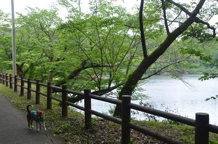 20140519小中池公園35