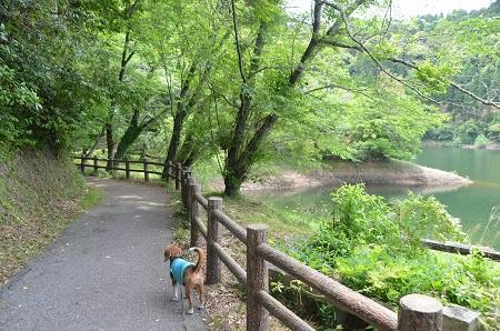 20140519小中池公園34