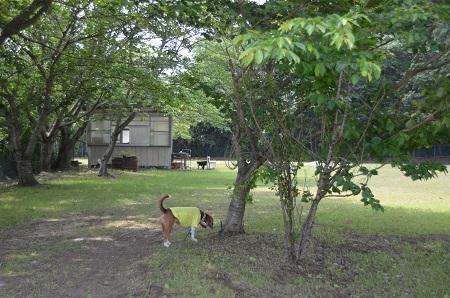 20140524第1常陸野公園06