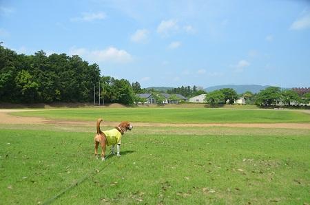 20140524第1常陸野公園07
