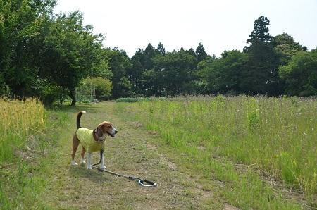 20140524宍倉城址09
