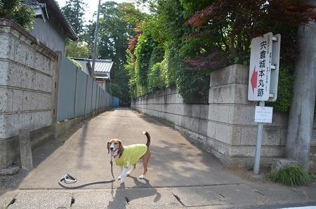 20140524宍倉城址22