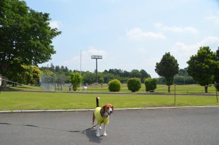 20140524第1常陸野公園02