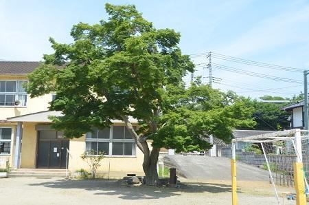 20140602沢松小学校10