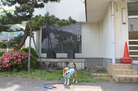 20140602桜井小学校03