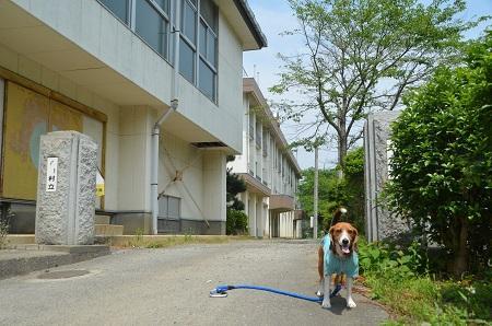 20140602桜井小学校01