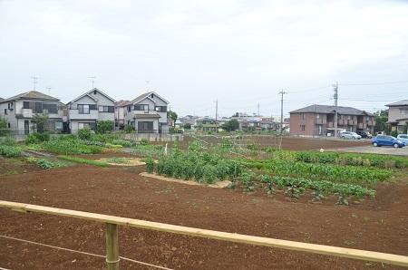20140605妙見神社 高津11