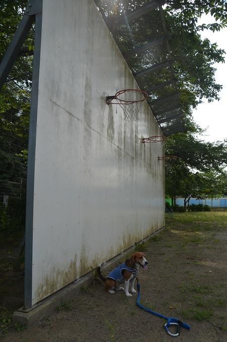 20140620小御門小学校09
