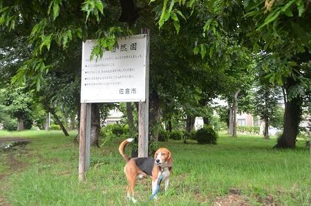20140625志津自然園01