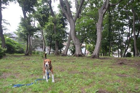20140625志津自然園09