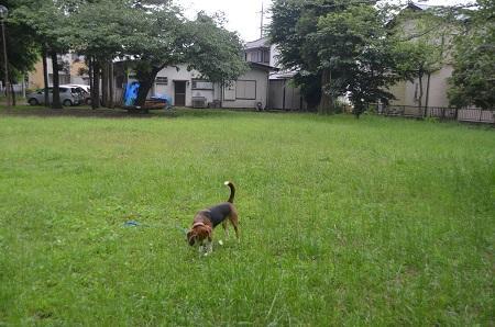 20140625志津自然園07