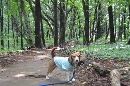 20140626園生の森公園06