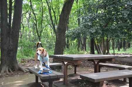 20140626園生の森公園05