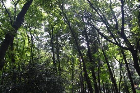 20140626園生の森公園03