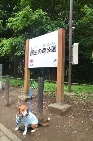20140626園生の森公園12