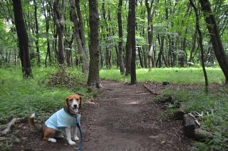 20140626園生の森公園08