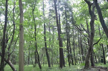 20140626園生の森公園07