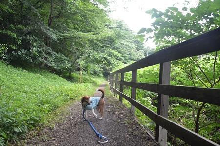 20140626園生の森公園15