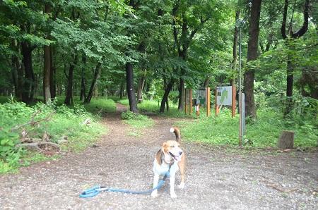 20140626園生の森公園13