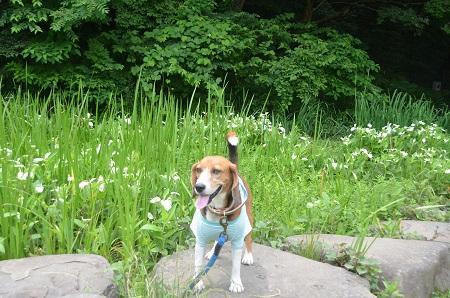 20140626園生の森公園23