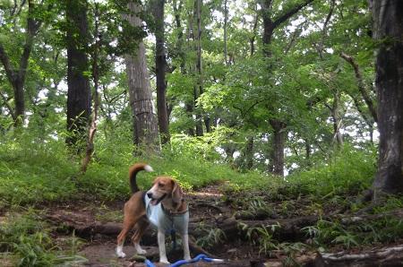 20140626園生の森公園24