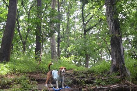 20140626園生の森公園25