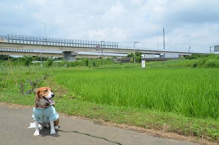 20140626都川水の里公演04
