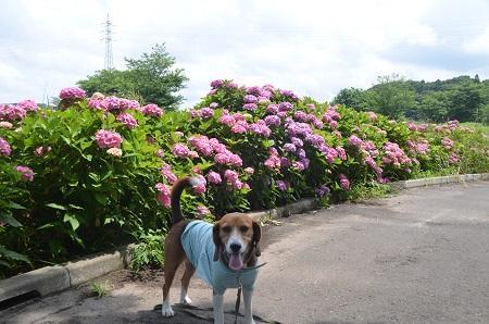 20140626都川水の里公園14
