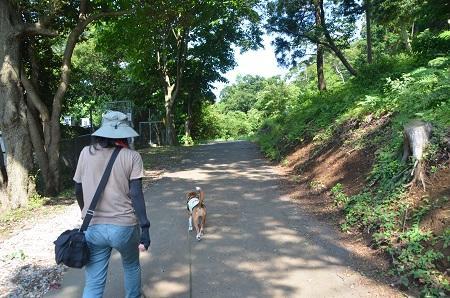 20140701小室山公園10